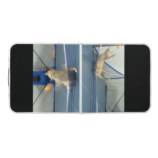 Table tennis cat