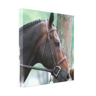 Tacked Dark Bay Horse Canvas Print