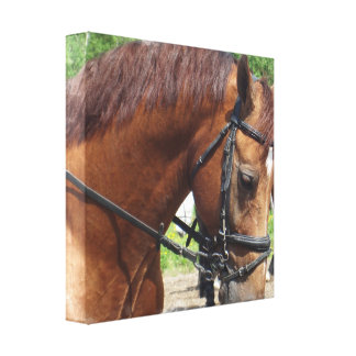Tacked Draft Horse Canvas Print
