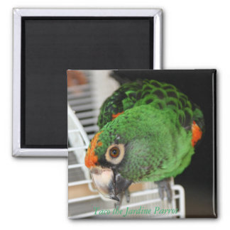 Taco the Jardine Parrot Square Magnet