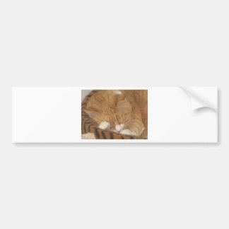 Taco the Siesta Cat Car Bumper Sticker