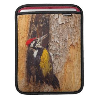 Tadoba Andheri Tiger Reserve 2 iPad Sleeve