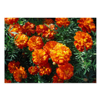 Tagetes Pack Of Chubby Business Cards