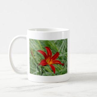 Taglilie blühend im Garten Einzelblüte Nahaufnahme Kaffee Tasse