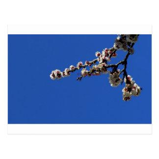 tagoudis_vassilis_''Spring 1''.JPG Postcard