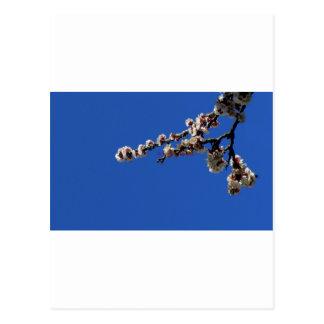 tagoudis_vassilis_''Spring 1''.JPG Postcards