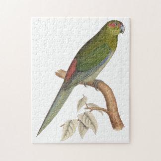 Tahiti Parakeet Illustration, c. 1849 Jigsaw Puzzle