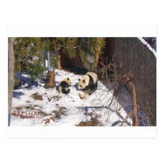 Tai Shan and Mei Xiang, giant panda bears Postcard