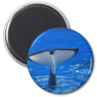 Tail of a Whale Magnet Magnet