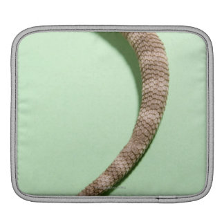 Tail of bearded dragon iPad sleeve