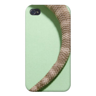 Tail of bearded dragon iPhone 4 cases