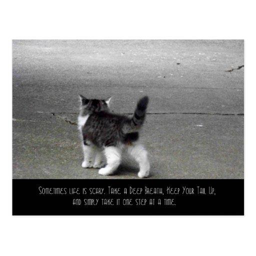 Tail Up (Kitten) Postcard