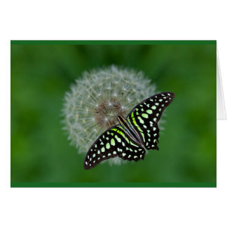 Tailed Jay Butterfly Greeting Card