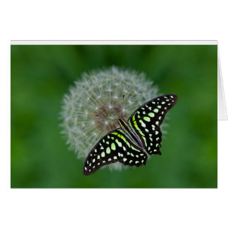 Tailed Jay Butterfly Card