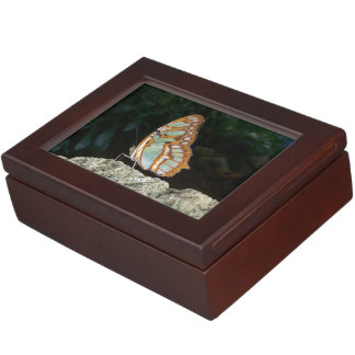 Tailed Jay Butterfly Memory Boxes