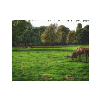 Take a bow, Stag Canvas Print