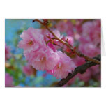 Take a deep breath pink cherry blossoms