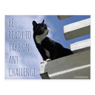 Take on any Challenge motivational cat Postcard