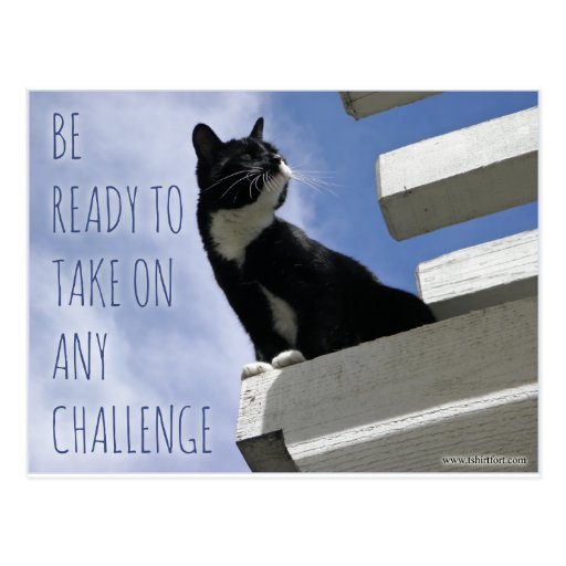 Take on any Challenge motivational cat Post Card