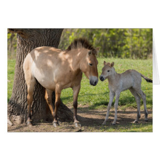 Takhi Mare with Her Foal Card