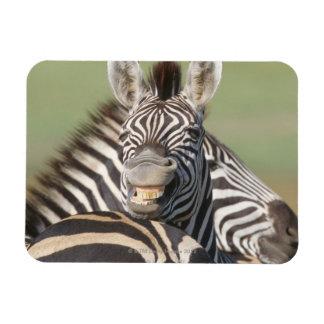 Tala Private Reserve, Kwazulu Natal, South Rectangular Photo Magnet