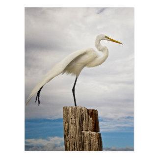 Talented Egret   Fort Myers Beach, Florida Postcard