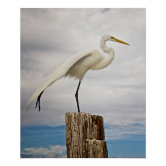 Talented Egret | Fort Myers Beach, Florida Poster