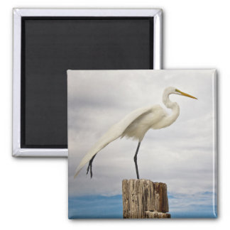 Talented Egret | Fort Myers Beach, Florida Square Magnet