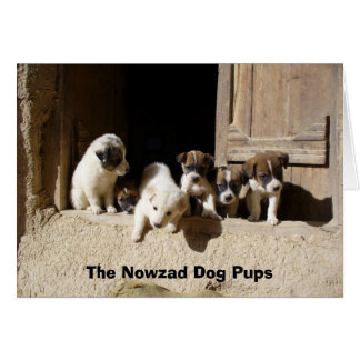 Tali pups at the door, The Nowzad Dog Pups Card