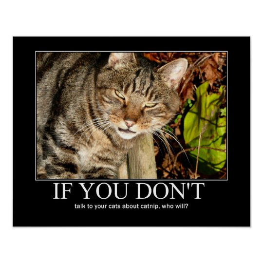 Talk About Catnip Artwork Poster