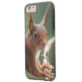 TALK SQUIRREL - Photography Jean Louis Glineur Tough iPhone 6 Plus Case