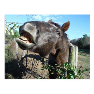 Talking Brown Horse Postcard