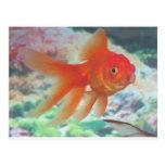 Talking Goldfish Postcard
