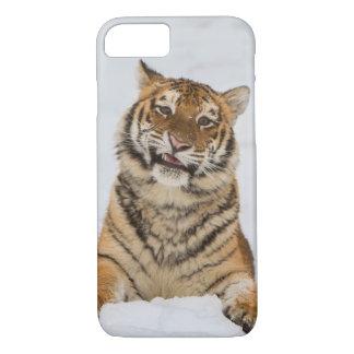 Talking Tiger Case