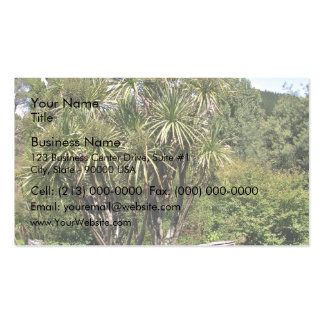 Tall green cabbage tree against the blue sky pack of standard business cards
