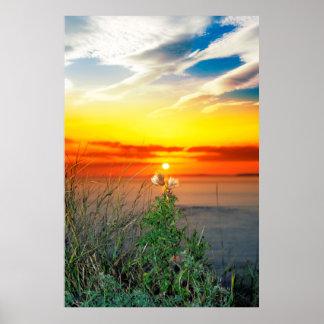 tall thistles on the wild atlantic way sunset poster