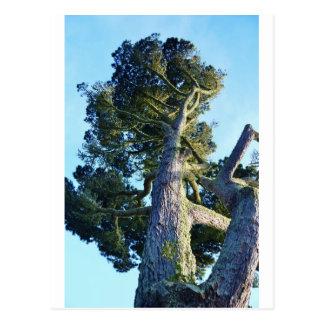Tall Tree Postcard