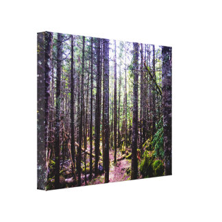Tall Trees Forest Canvas Print
