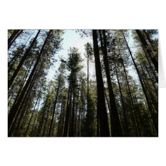 Tall Trees Greeting Cards