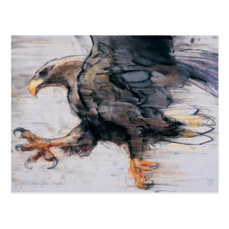Talons - White tailed Sea Eagle 2001 Postcard