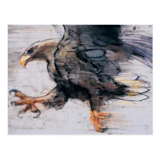 Talons - White tailed Sea Eagle 2001 Postcard