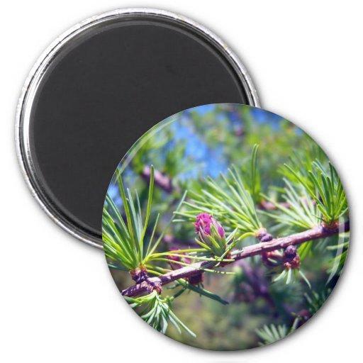 Tamarack Larch Foliage 4 Magnet
