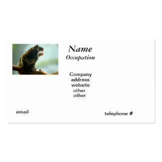Tamarin Monkey Pack Of Standard Business Cards
