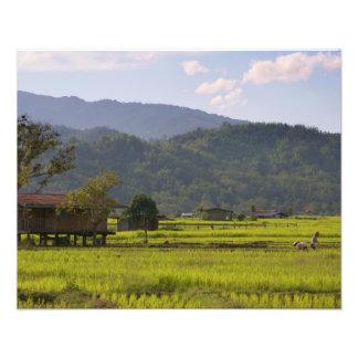 Tambunan Rice Farmers Art Photo