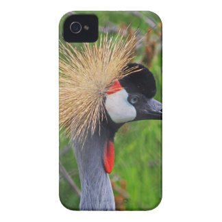 Tame a Wild Bride Case-Mate iPhone 4 Cases