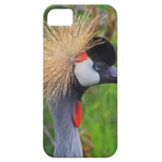 Tame a Wild Bride iPhone 5 Cases