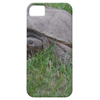 Tame Snapper Turtle iPhone 5 Case