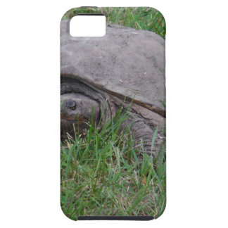 Tame Snapper Turtle iPhone 5 Covers