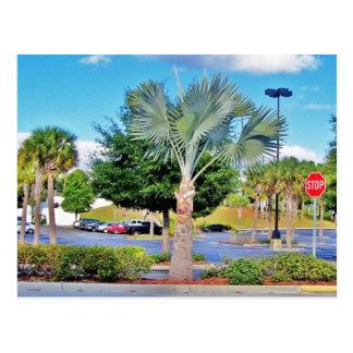 Tampa-Florida Postcard