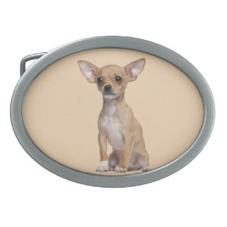 Tan and White Chihuahua Oval Belt Buckle